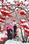 雪化粧、コントラスト鮮やか 県内きょうの最低気温まとめ