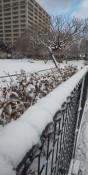 県内厳しい冷え込み 各地の最低気温と積雪まとめ