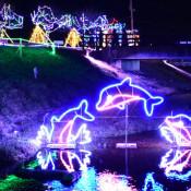 イルカがジャンプ、夜の川 かるまい冬灯り