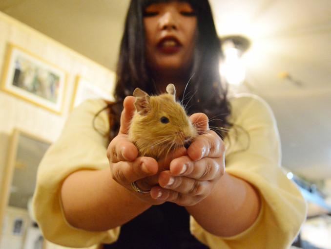 ネズミの仲間「デグー」