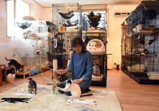 保護された猫の譲渡などを行う保護猫アンドゥ