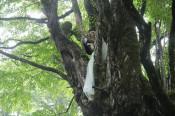 大きな森の小さな結婚式