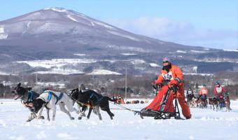 白銀のコースを人犬一体で駆けるレース