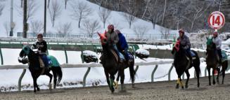 春競馬に向け、砂の感触を確かめる競走馬=19日、盛岡市新庄・盛岡競馬場