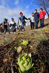 フキノトウを見つけ、歓声を上げる子どもたち=27日、紫波町東長岡・長岡農村公園