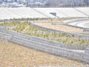 高田松原、植樹完了へ 計4万本、7月にも
