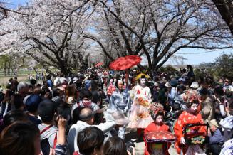 咲き誇る桜の下を練り歩くおいらん道中=2019年4月、北上市立花・北上展勝地