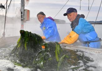 ワカメのボイル作業に励む村上和男さん(右)。茶褐色が鮮やかな緑色に変わった=23日、大船渡市末崎町・門之浜漁港