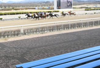 無観客の中でレースを繰り広げる競走馬=20日、奥州市・水沢競馬場