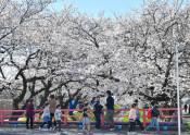 花のトンネル楽しむ 栃木・千歳袋川