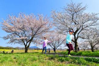 筑波山を望む母子島遊水地のソメイヨシノ=26日午後、筑西市飯田