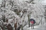 幻想的な花冷えの雪 宇都宮市・八幡山公園