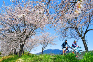 筑波山を望むつくば霞ケ浦りんりんロードの桜並木=2日午後、茨城県つくば市北条