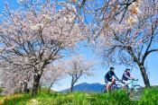 筑波山背に続く並木 茨城県・つくば霞ケ浦りんりんロード
