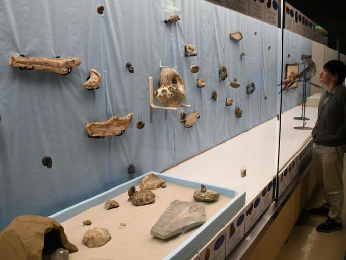 化石の生物が生きていた時の様子を再現した「化石の水族館」。県内で発掘された化石も多数展示されている