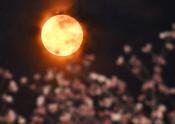 神秘の輝き 赤い花月夜 宮古で「スーパームーン」