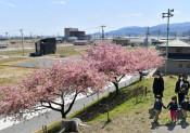 記憶伝える桜ライン311 陸前高田市・浄土寺