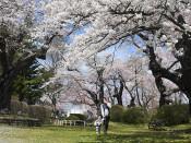 水沢公園(奥州・水沢中上野町)