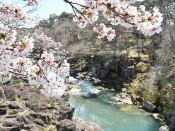厳美渓の桜(一関・厳美町)