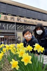 盛岡駅前で鮮やかに咲くキズイセンを見てほほ笑む親子