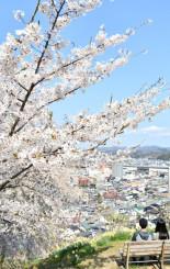 満開を迎えた釣山公園の桜。街並みが見渡せる