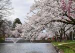 圧巻のお堀周辺 山形県・最上公園