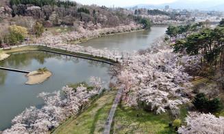 満開の桜に囲まれた高松池。淡いピンク色に染まる=盛岡市高松(本社小型無人機から撮影)