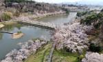 桜色の道どこまでも 盛岡・高松池