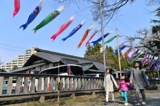 子どもの健康を祈願した約110匹のこいのぼりが飾られた住吉神社