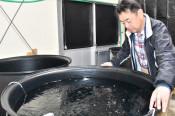 稚貝8万個目標に人工採苗 陸前高田特産エゾイシカゲガイ
