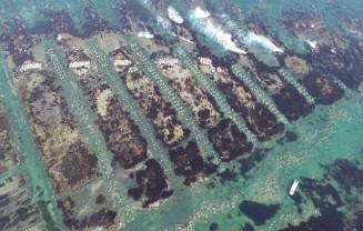 遠浅の岩盤を削って造られたウニの増殖溝。干潮時には陸地が姿を現す=洋野町種市(本社小型無人機から撮影)