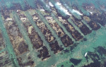 初夏の味育てる「ウニ牧場」 洋野・宿戸漁港の増殖溝