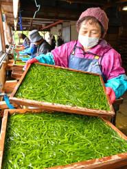 鮮やかな緑色に輝くすき昆布=22日、普代村上の山