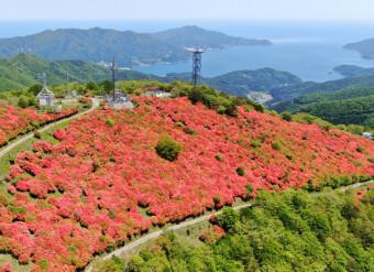 満開のヤマツツジで赤く染まる今出山の山頂付近=大船渡市(本社小型無人機から撮影)