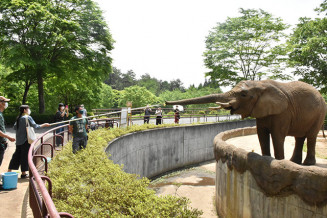 ゾウのマオに餌をやる来場者。国内初の人工授精を目指している