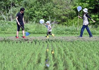虫取り網を手に田んぼのあぜ道を散策する家族=6日、滝沢市根堀坂