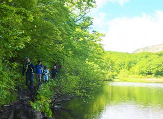 新緑に囲まれた山道を歩き、中沼の景色を楽しむ登山客