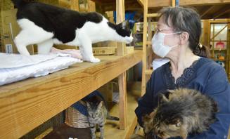 保護施設の猫たちに優しいまなざしを向ける下机都美子代表。譲渡会が開催できず施設はほぼ満杯だ=雫石町