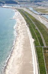 約4万本の松の植樹が進む高田松原。砂浜の人工再生が行われ、来年夏の海開きを目指す=陸前高田市