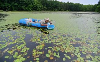 ゴムボートに乗り、ジュンサイの新芽を摘み取る北田忠夫さん=22日、盛岡市玉山永井