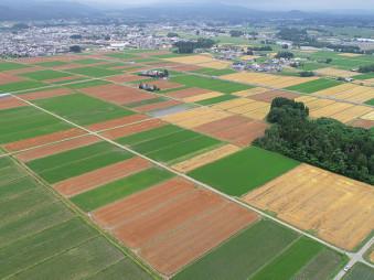 稲田に映える麦畑=紫波町日詰付近(本社小型無人機から撮影)