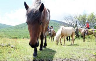 中のまきばで草をはむ馬たち