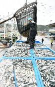 マイワシ大漁、浜活気 久慈で巻き網船が今季初入港