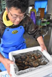 出荷が始まったエゾイシカゲガイ。コロナの影響は不透明だが生産者は信じて前に進む