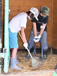 アルパカの寝室を清掃する児童