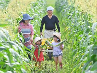 子どもたちが見上げるほどに育ち、収穫期を迎えたトウモロコシ=4日、紫波町西長岡(報道部・山本毅撮影)