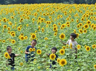一面に咲き誇るヒマワリを笑顔で見つめる子どもたち=5日、北上市和賀町岩崎新田