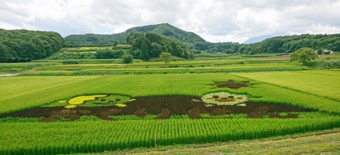 特産キャベツのPRキャラクターなどを描いた浮島地区の田んぼアート。色の異なる稲の収穫を体験できる