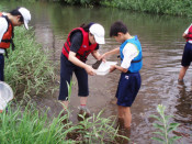 下橋中、全校一丸で全国功労 水質調査、植樹に励む