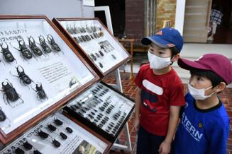 世界中のカブトムシとクワガタムシの標本に見入る子どもたち